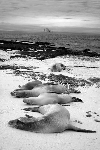 Sleeping Sea Lions.jpg