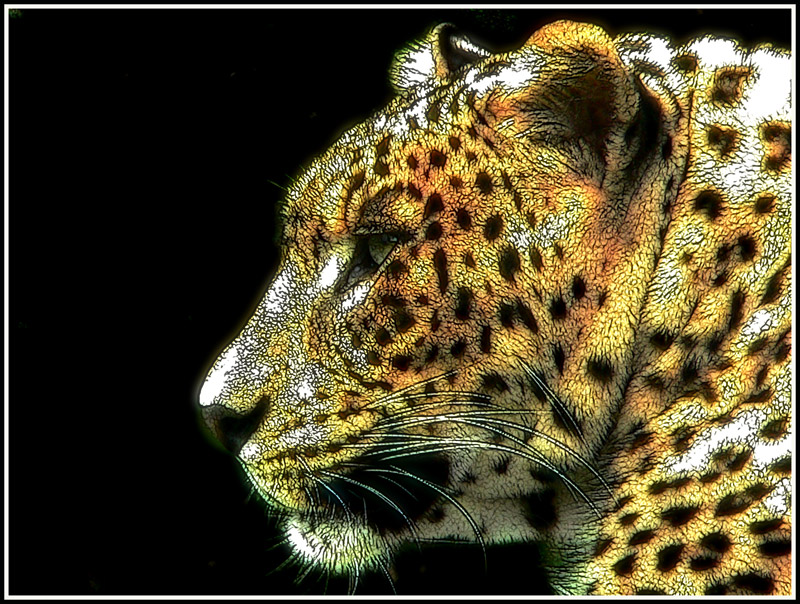 Felini-Leopard-01.jpg