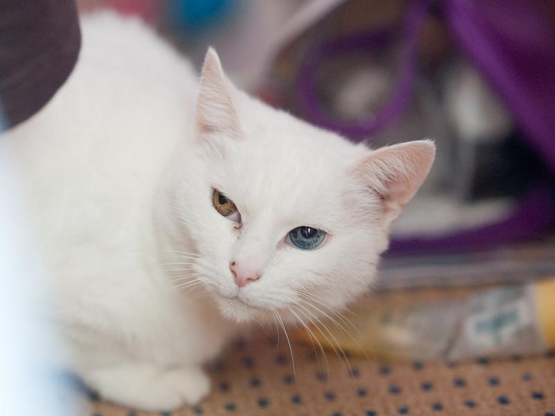 100404_Nat's-Cats_35.jpg