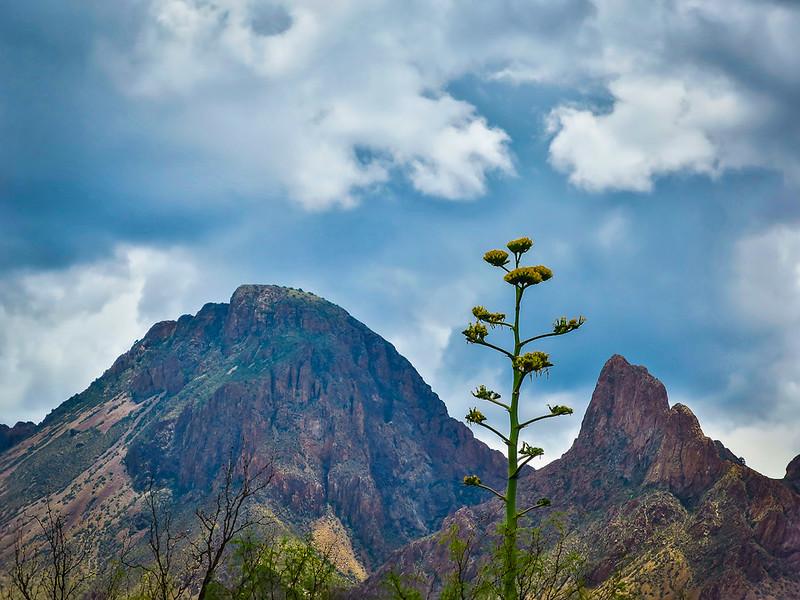 Big Bend agave chisos clouds.jpg