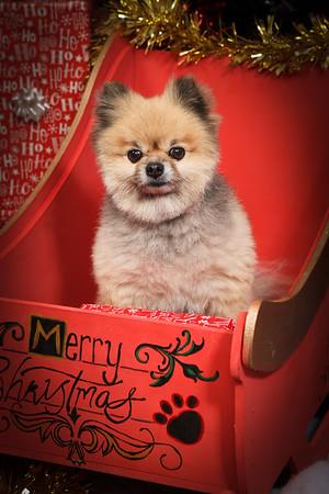 Doggy Xmas