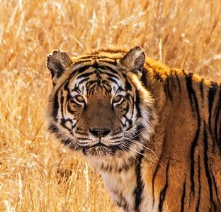 Wild Animal Sanctuary.