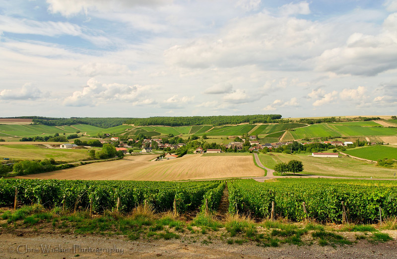 Vineyards around Noe-les-Mallets, Champagne, France.