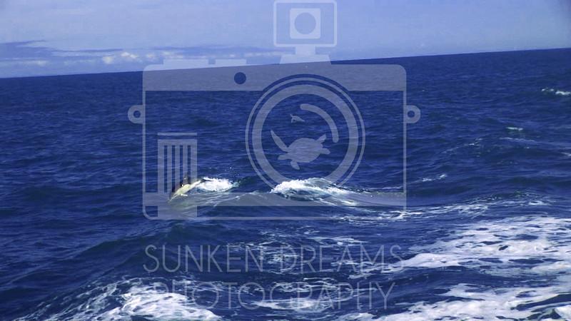 Lundy Island Edit.Still015.jpg