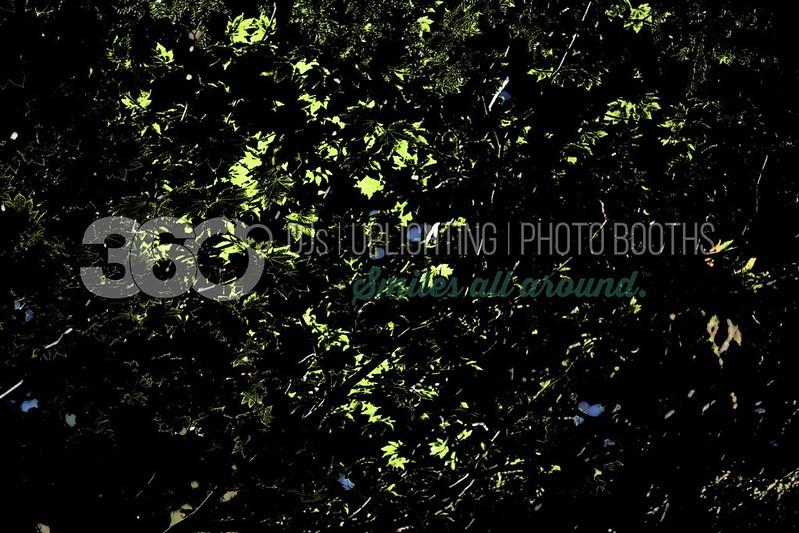 Backlighted-Leaves_batch_batch.jpg