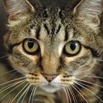 Blog cats