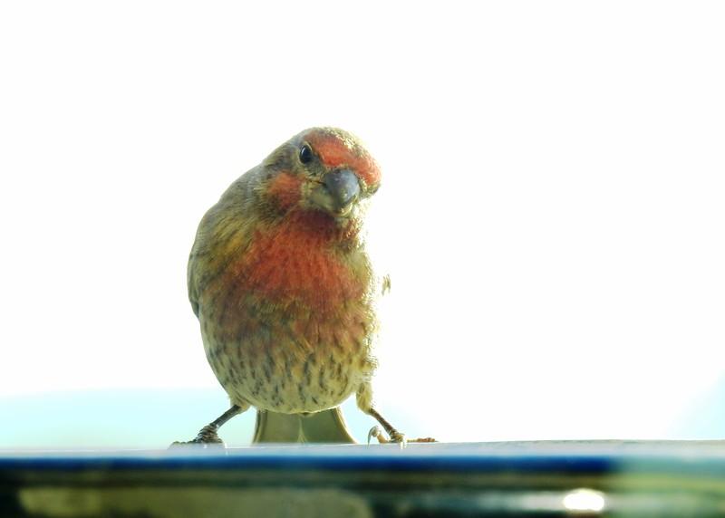 birds (128).JPG