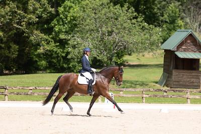 Horse 393