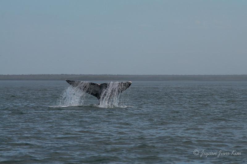 Mexico-Loreto-Whale-2243.jpg