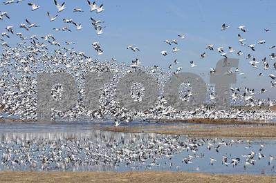 bird-fests-at-or-near-us-wildlife-refuges