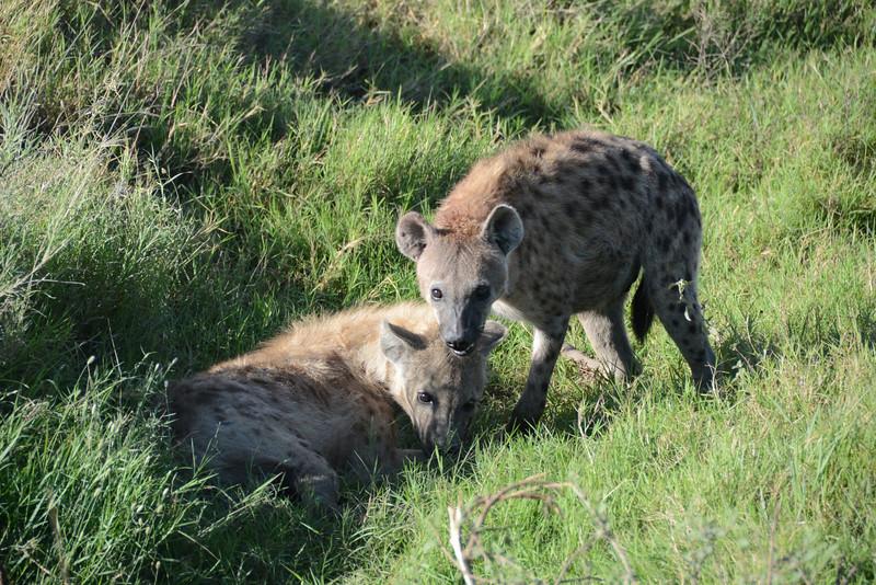 East Africa Safari 385.jpg