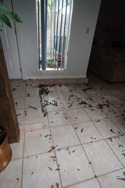 Subirats Home Deer damage-3965.jpg