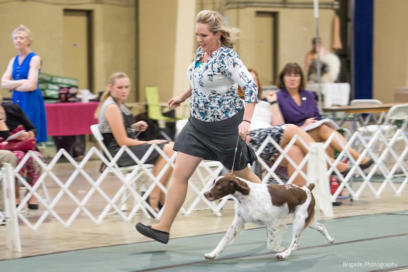 19	ORY'S ABSOLUTE CATCH AT FYREBYRD , SS05321702 5/14/2018. Breeder: Joy Ory & Kellie L Miller. By CH Trumphant's Absolutely G.Q JH -- GCHG Ory's Catch Me If You Can. Kellie Miller and Sara Taylor . Dog.