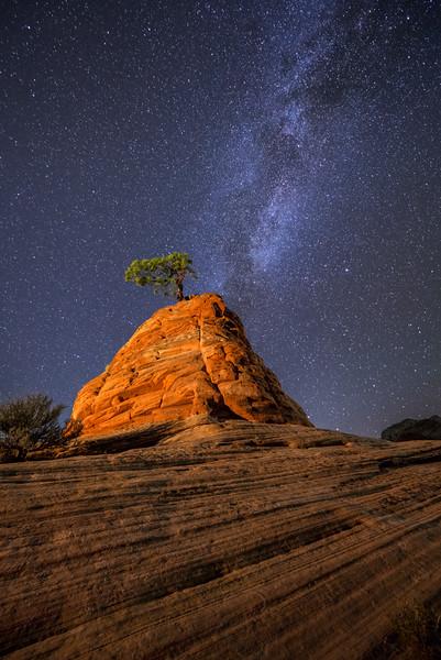 Zion's Little Tree