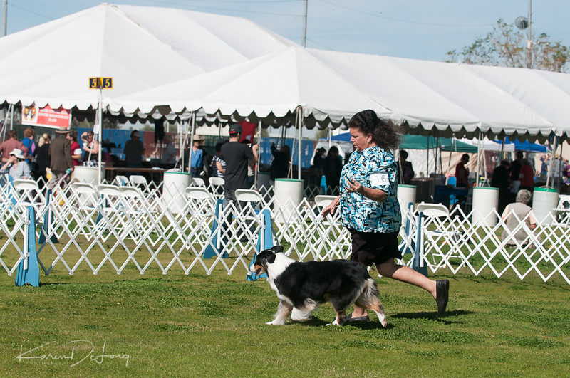 20170205_Australian Shepherds_Lost Dutchman Kennel Club-131.jpg