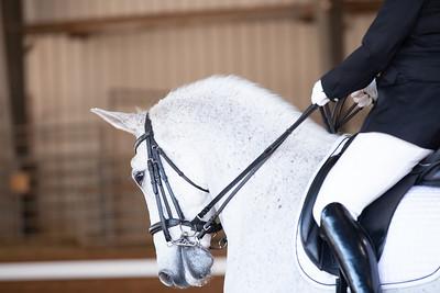 Horse 112