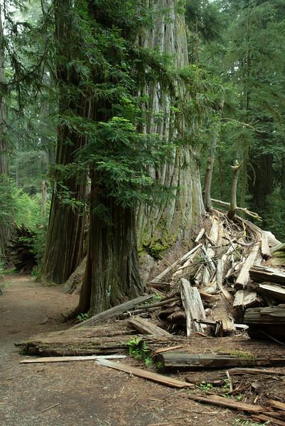 redwoodsFin29-1158.jpg