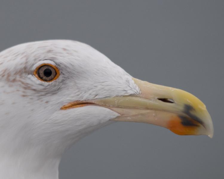 19-Sept North America Birds-5326.JPG