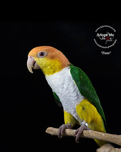 Parrots - CT Parrot Rescue