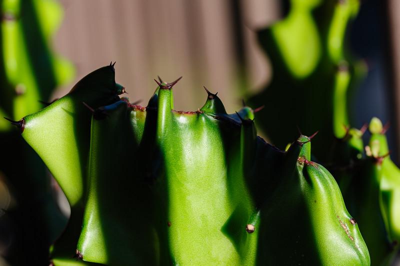 succulent-1153.jpg