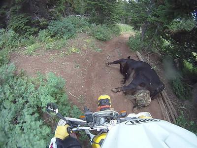 Dead Cow ride