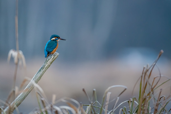 Birder's Corner - Bee-eaters, Kingfishers and Rollers