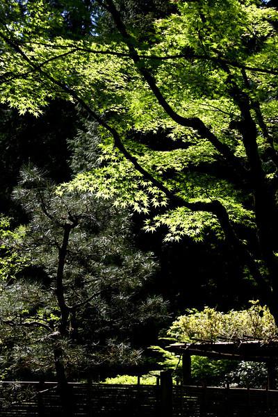 Portland Japanese Garden 6-3-11  1771.jpg