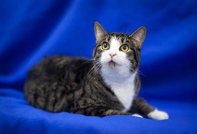 DC Humane Society -West Atl. Animal Clinic 06-27-12