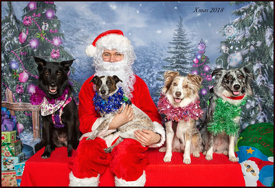 Santa Photos - PetBarn Morayfield