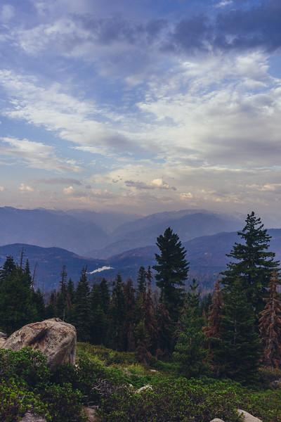 Rui in Sequoia-06973.jpg