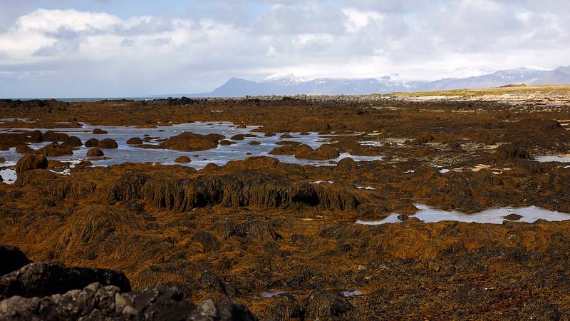 Iceland_39A9064_1.jpg