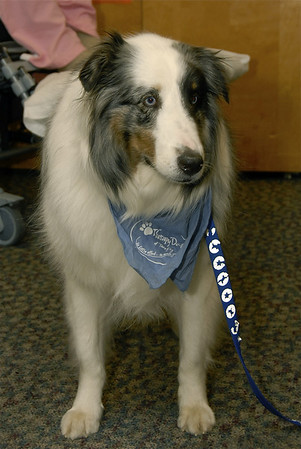 Therapy Dogs of Tenafly Visit Dellridge