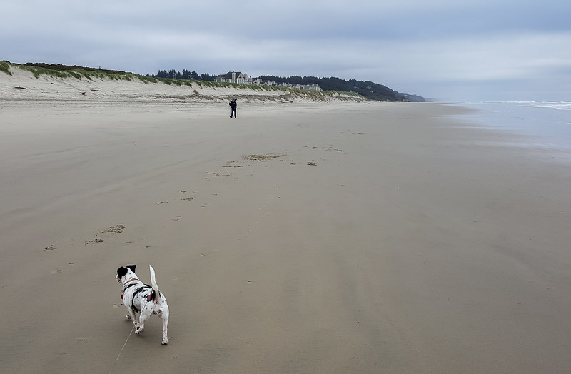 Beach walk with Mattie (7 of 20).jpg
