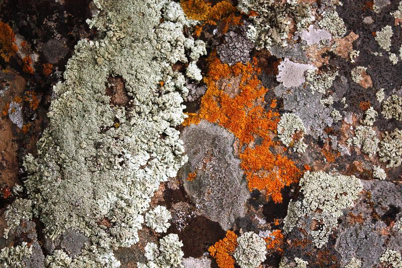 Granite Lichen