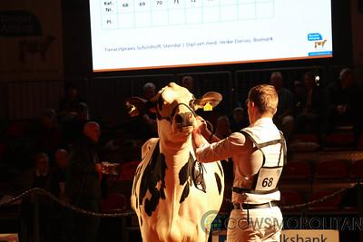 Holstein Vision 2017 - Intermediate Cows