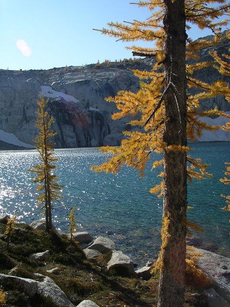 Larch tree and pretty blue lake.