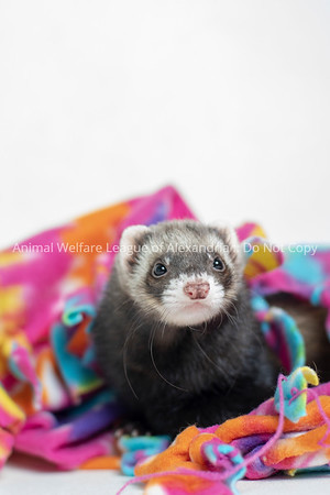 2018 June Small Animal Adoptions