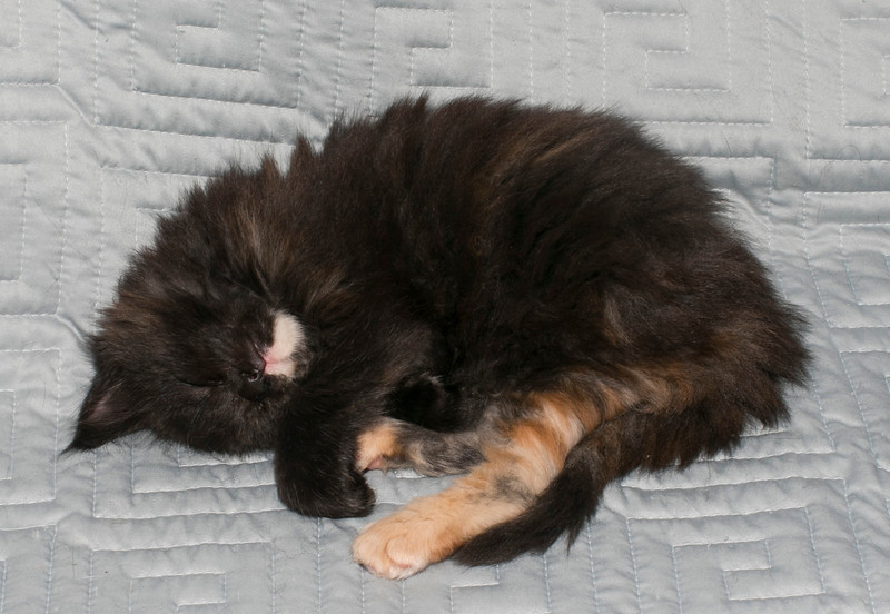 Kittens319.jpg