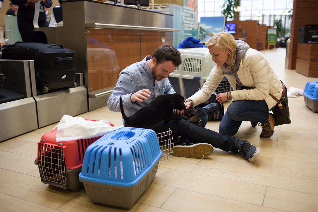 . In this image released on Friday, March 14, 2014, spending time with the dogs in Sochi airport before they\'re put back in their carriers for the flight. Humane Society International has been working with Robin Douglas Macdonald and Olympic silver medalist Gus Kenworthy for the past several weeks in trying to transport the dogs from Sochi, Russia, to the United States. (Alexander Zemlianichenko Jr./AP Images for Humane Society International)