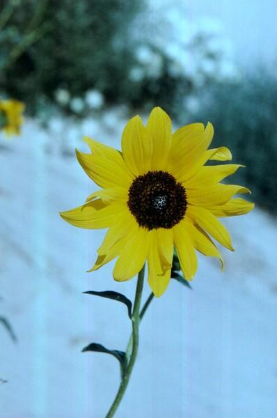 amh FLOWERS (1143).jpg