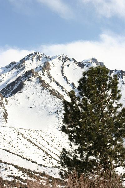 mountain and tree.jpg