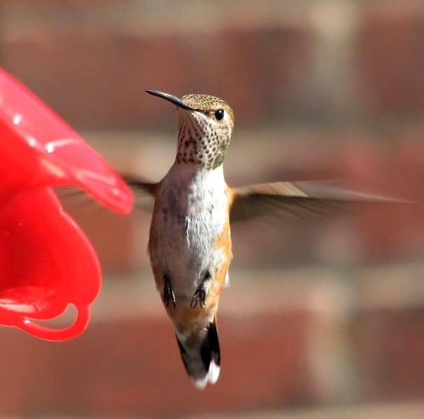 birds (156).jpg