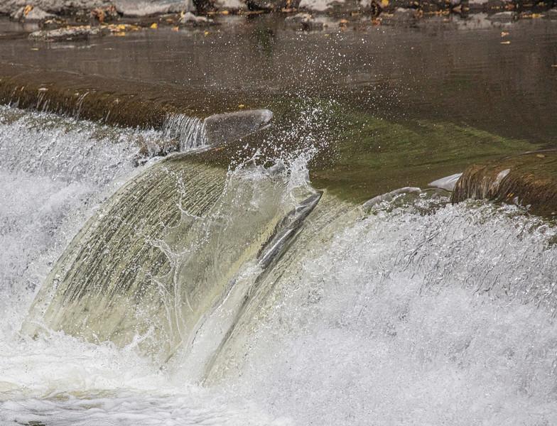 salmon upstream (16 of 48).jpg