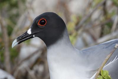 4. Genovesa (bird island)