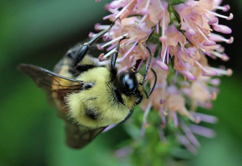 Bumble bee 40