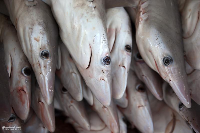 Fish market (4).jpg