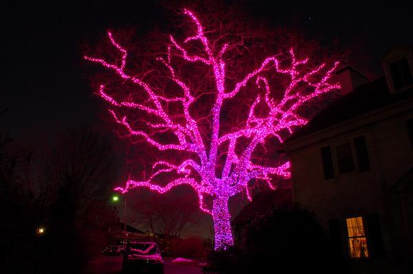 Original Pink Tree - Springfield, Pa. Dec. 22, 2009