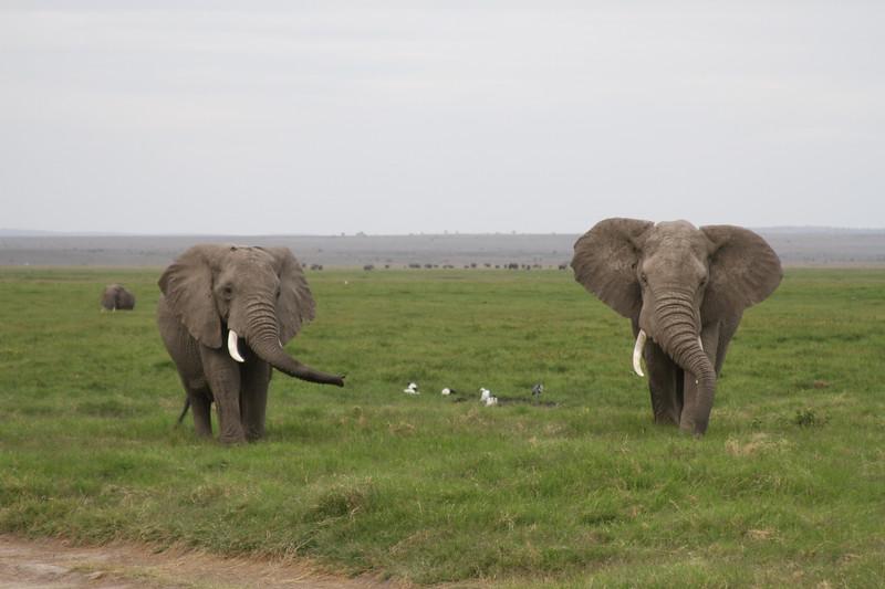 Kenya 2019 #2 1571.JPG