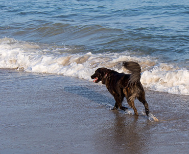 Dogs at Matunuck Beach