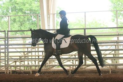 Sport Horse Under Saddle